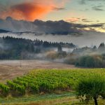 Best vineyard view Corvallis