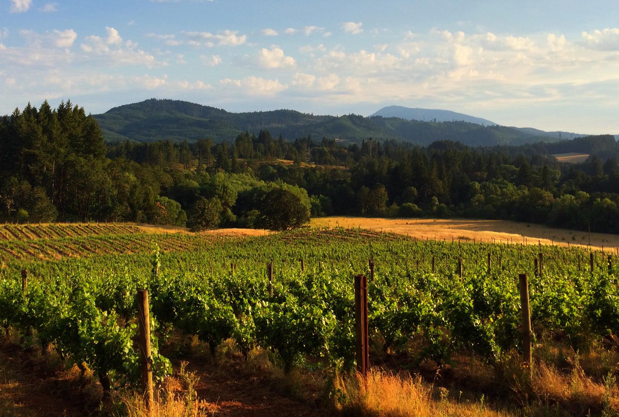 Lumos Wine Company